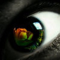 Portrait of a photographer (avatar) Emerald Wake © (Wizzo)